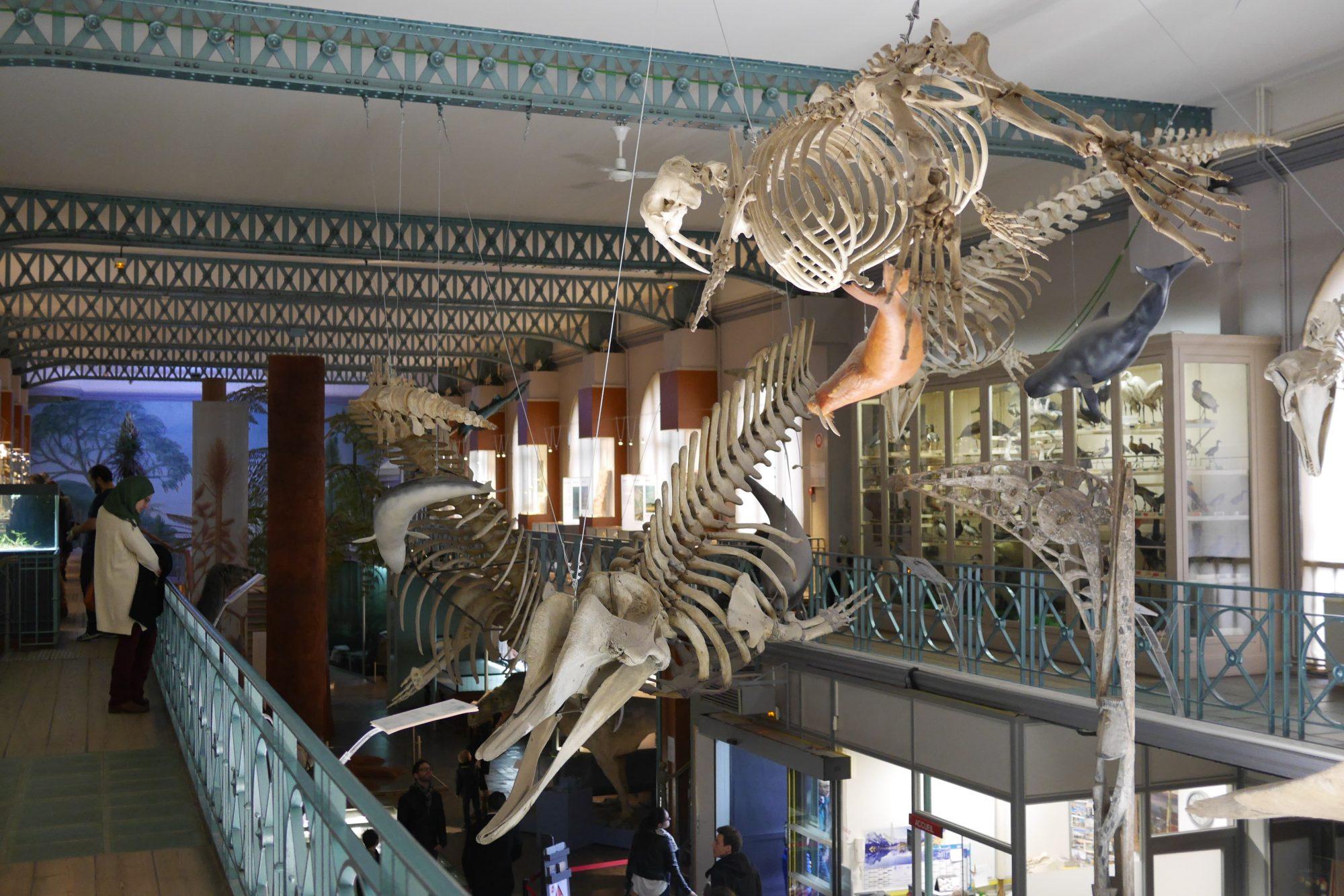 Lille musée histoire naturelle