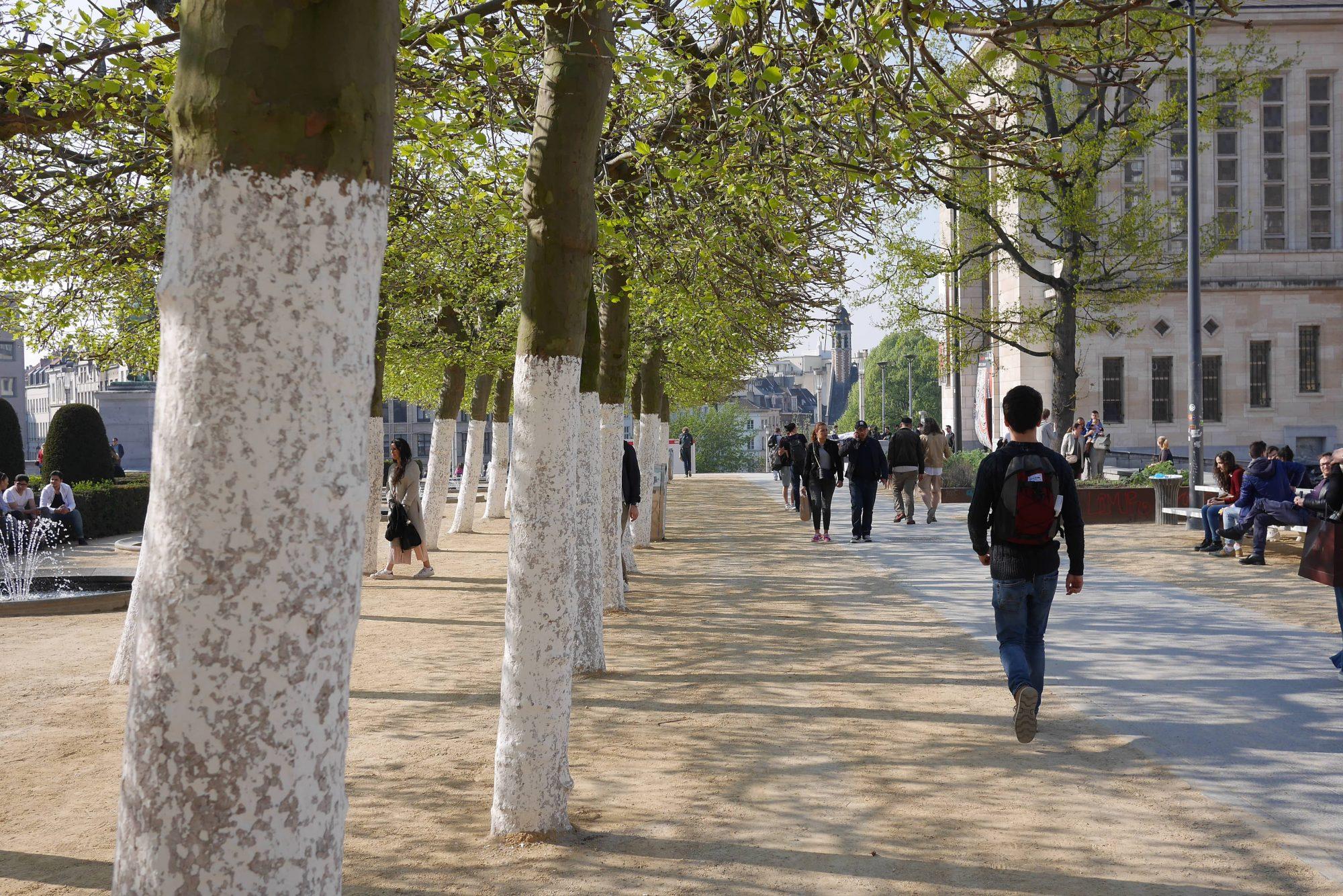 Bruxelles arbre
